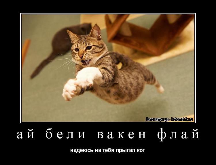 Котоматрица: ай бели вакен флай надеюсь на тебя прыгал кот