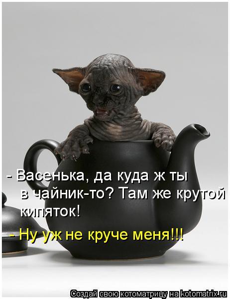 Котоматрица: - Васенька, да куда ж ты  в чайник-то? Там же крутой  кипяток! - Ну уж не круче меня!!!