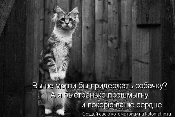 Котоматрица: Вы не могли бы придержать собачку? А я быстренько прошмыгну и покорю ваше сердце...