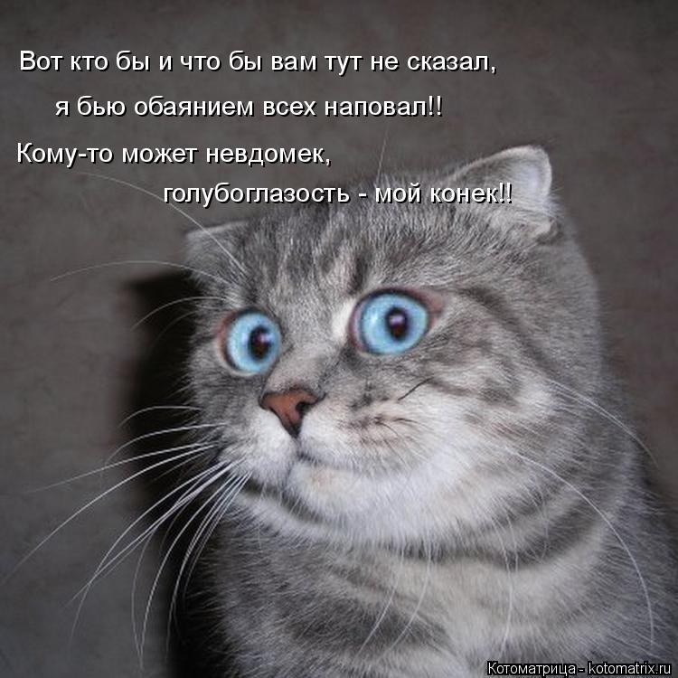 Котоматрица: Вот кто бы и что бы вам тут не сказал, я бью обаянием всех наповал!! Кому-то может невдомек,  голубоглазость - мой конек!!