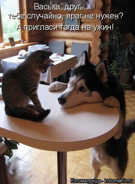 Котоматрица: Васька, друг,  тебе случайно, враг не нужен? А пригласи тогда на ужин!