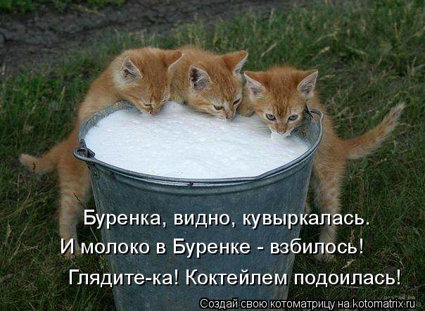 Котоматрица: Буренка, видно, кувыркалась. И молоко в Буренке - взбилось! Глядите-ка! Коктейлем подоилась!