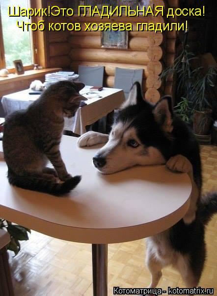 Котоматрица: Шарик!Это ГЛАДИЛЬНАЯ доска! Чтоб котов хозяева гладили!