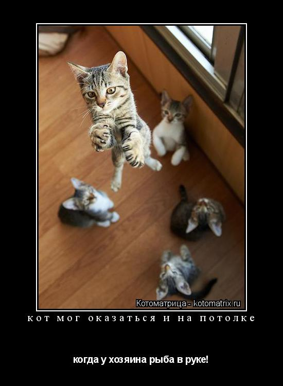 Котоматрица: кот мог оказаться и на потолке когда у хозяина рыба в руке!