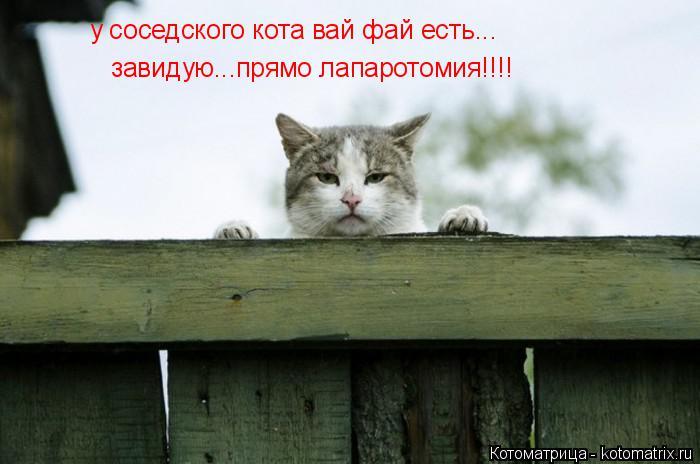 Котоматрица: у соседского кота вай фай есть... завидую...прямо лапаротомия!!!!