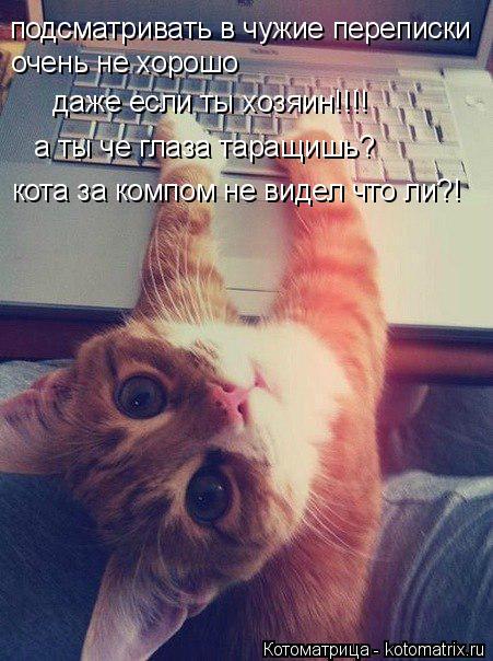 Котоматрица: подсматривать в чужие переписки  очень не хорошо даже если ты хозяин!!!! а ты че глаза таращишь? кота за компом не видел что ли?!