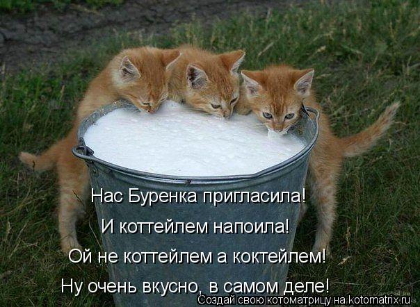 Котоматрица: Нас Буренка пригласила! И коттейлем напоила! Ой не коттейлем а коктейлем! Ну очень вкусно, в самом деле!