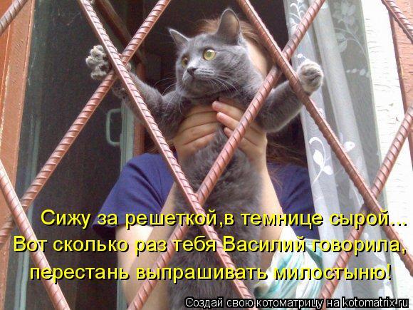 Котоматрица: Сижу за решеткой,в темнице сырой... Вот сколько раз тебя Василий говорила, перестань выпрашивать милостыню!