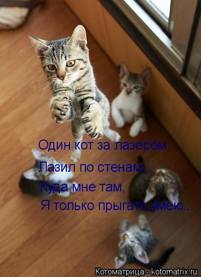 Котоматрица: Один кот за лазером Лазил по стенам... Куда мне там, Я только прыгать умею...