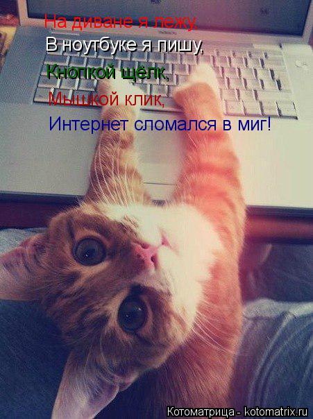 Котоматрица: На диване я лежу, В ноутбуке я пишу, Кнопкой щёлк, Мышкой клик, Интернет сломался в миг!