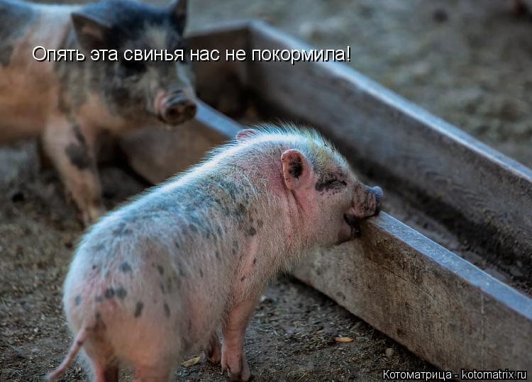 Котоматрица: Опять эта свинья нас не покормила!