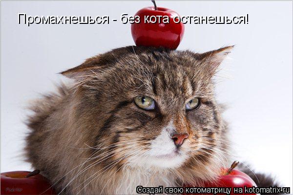 Котоматрица: Промахнешься - без кота останешься!