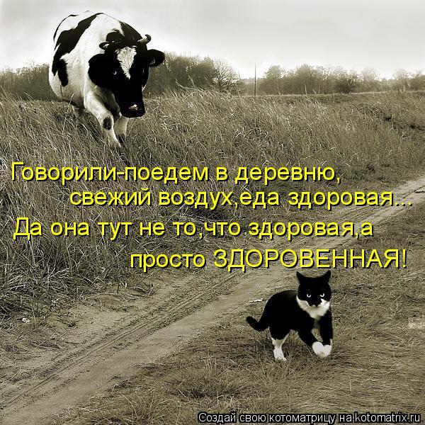 Котоматрица: Говорили-поедем в деревню, свежий воздух,еда здоровая... Да она тут не то,что здоровая,а просто ЗДОРОВЕННАЯ!