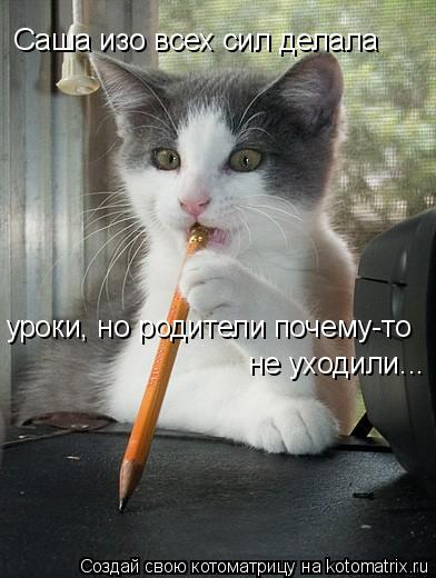 Котоматрица: Саша изо всех сил делала уроки, но родители почему-то не уходили...