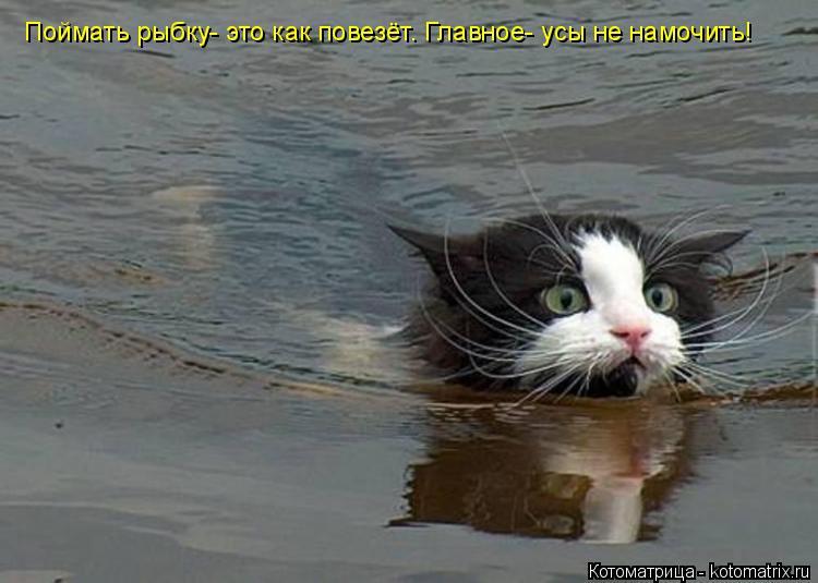Котоматрица: Поймать рыбку- это как повезёт. Главное- усы не намочить!