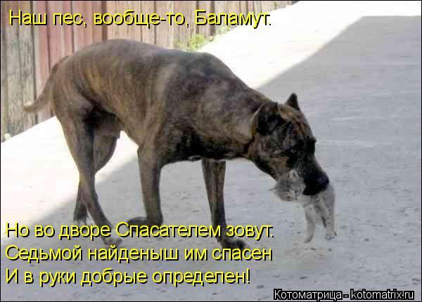 Котоматрица: Наш пес, вообще-то, Баламут. Но во дворе Спасателем зовут. Седьмой найденыш им спасен И в руки добрые определен!