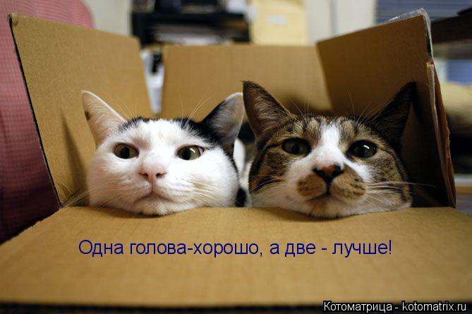 Котоматрица: Одна голова-хорошо, а две - лучше!