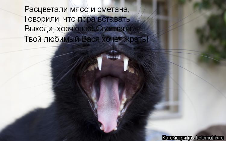 Котоматрица: Расцветали мясо и сметана, Говорили, что пора вставать. Выходи, хозяюшка Светлана, Твой любимый Вася хочет жрать!