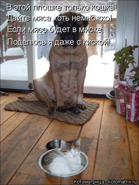 Котоматрица: В этой плошке только кошка! Дайте мяса хоть немножко! Если мясо будет в миске, Поделюсь я даже с киской!