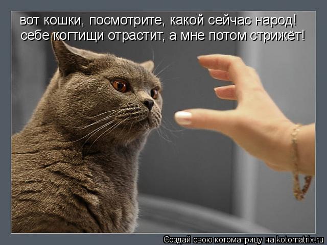 Котоматрица: вот кошки, посмотрите, какой сейчас народ! себе когтищи отрастит, а мне потом стрижёт!