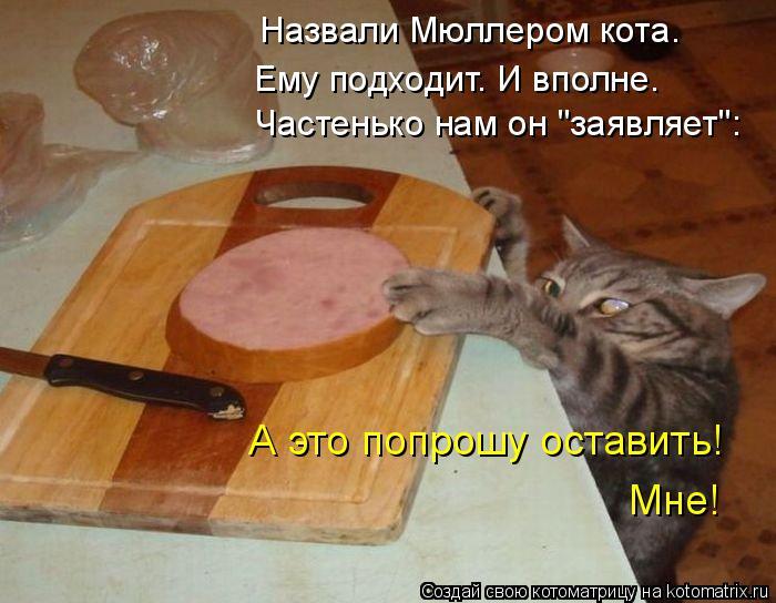 """Котоматрица: Назвали Мюллером кота. Ему подходит. И вполне. Частенько нам он """"заявляет"""": А это попрошу оставить! Мне!"""
