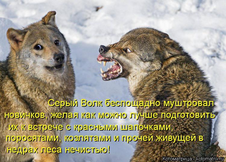 Котоматрица: Серый Волк беспощадно муштровал  новичков, желая как можно лучше подготовить  их к встрече с красными шапочками,  поросятами, козлятами и пр