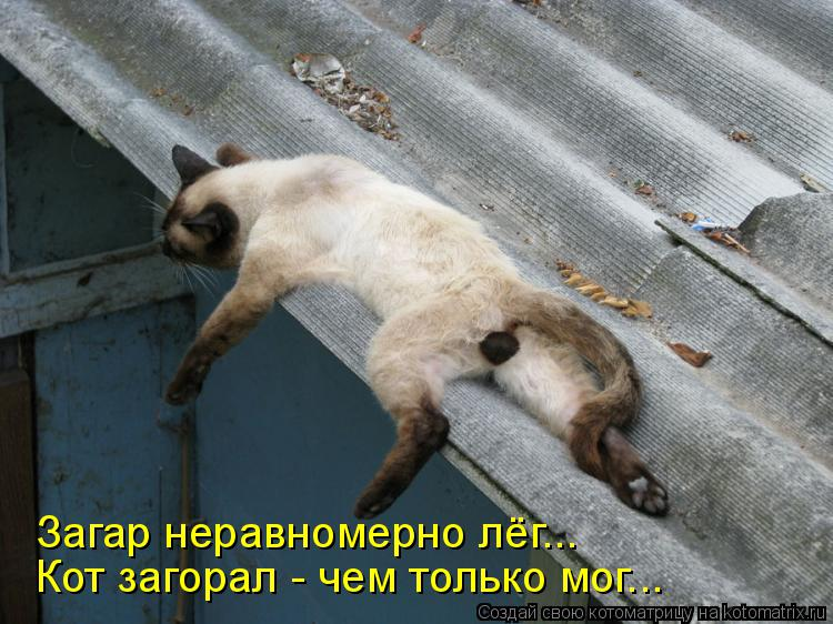 Котоматрица: Загар неравномерно лёг... Кот загорал - чем только мог...