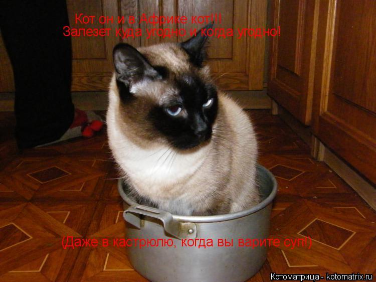 Котоматрица: Кот он и в Африке кот!!! Залезет куда угодно и когда угодно! (Даже в кастрюлю, когда вы варите суп!)
