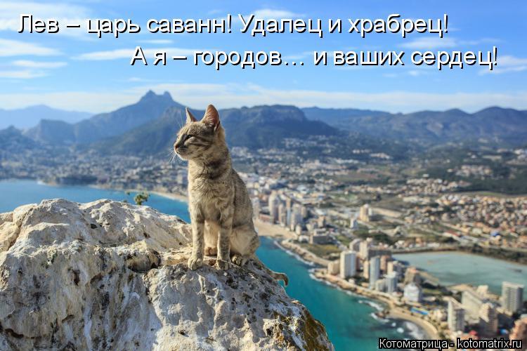 Котоматрица: Лев – царь саванн! Удалец и храбрец! А я – городов… и ваших сердец!