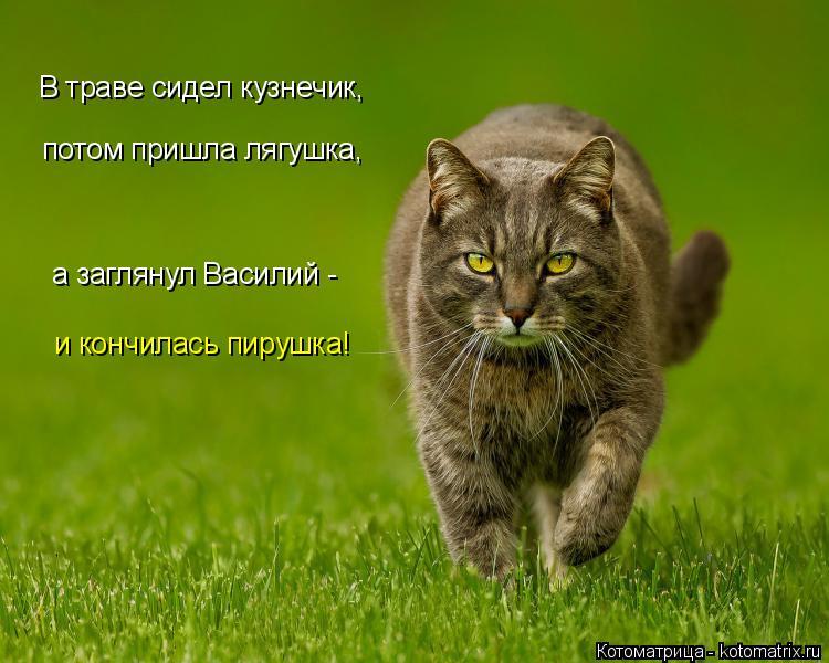 Котоматрица: В траве сидел кузнечик, потом пришла лягушка, а заглянул Василий - и кончилась пирушка!