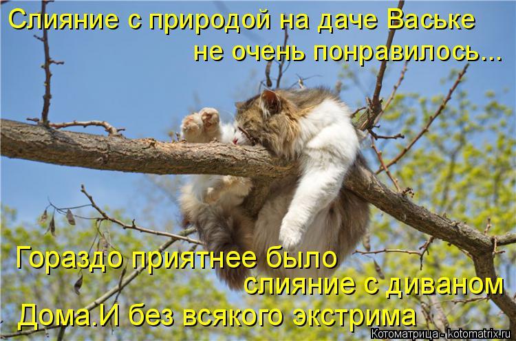 Котоматрица: Слияние с природой на даче Ваське не очень понравилось... Гораздо приятнее было  слияние с диваном Дома.И без всякого экстрима