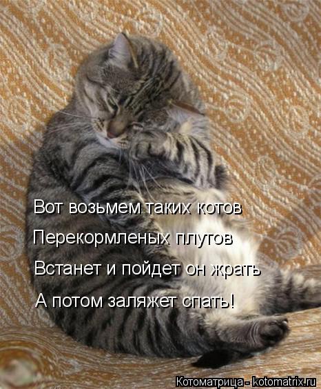 Котоматрица: Вот возьмем таких котов Перекормленых плутов Встанет и пойдет он жрать А потом заляжет спать!