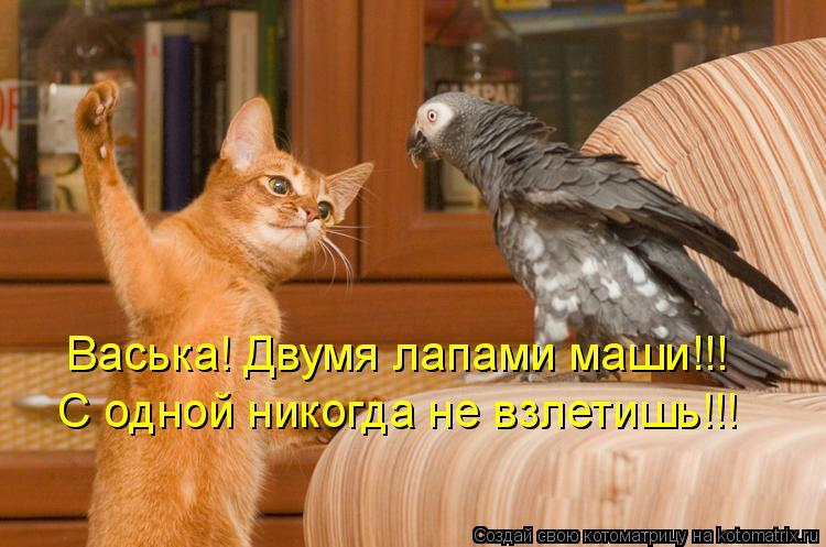 Котоматрица: Васька! Двумя лапами маши!!! С одной никогда не взлетишь!!!