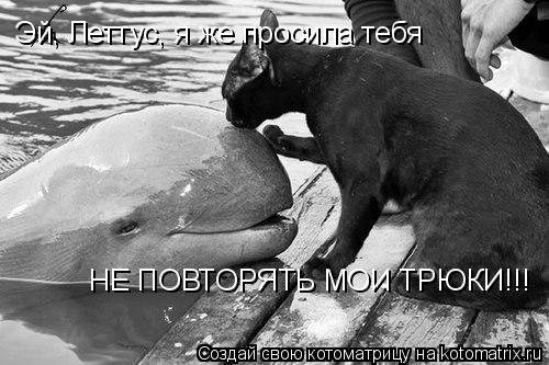 Котоматрица: Эй, Леттус, я же просила тебя НЕ ПОВТОРЯТЬ МОИ ТРЮКИ!!!