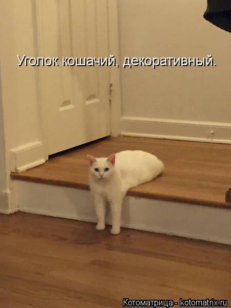Котоматрица: Уголок кошачий, декоративный.