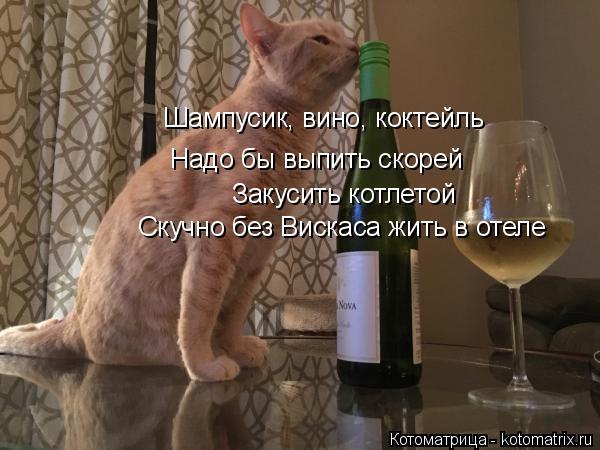 Котоматрица: Шампусик, вино, коктейль  Надо бы выпить скорей Закусить котлетой Скучно без Вискаса жить в отеле