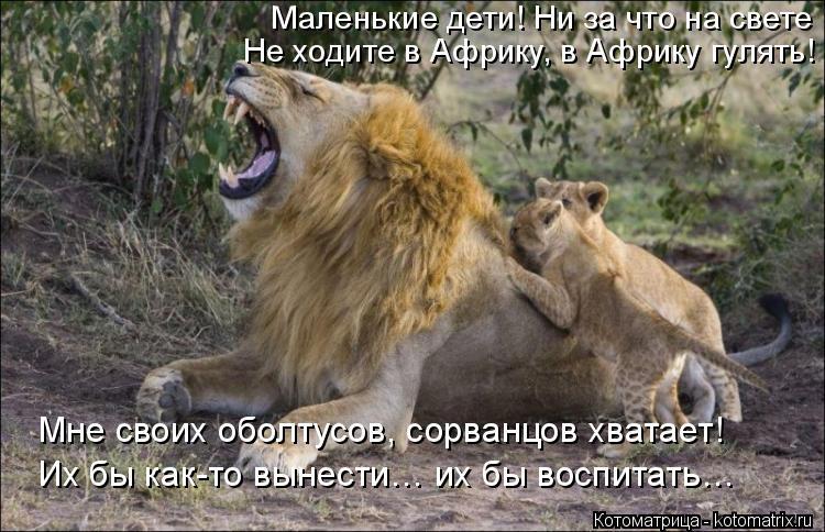 Котоматрица: Маленькие дети! Ни за что на свете Не ходите в Африку, в Африку гулять! Мне своих оболтусов, сорванцов хватает! Их бы как-то вынести… их бы во