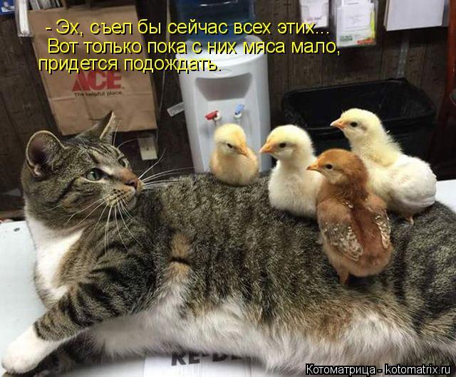 Котоматрица: - Эх, съел бы сейчас всех этих... Вот только пока с них мяса мало,  придется подождать.