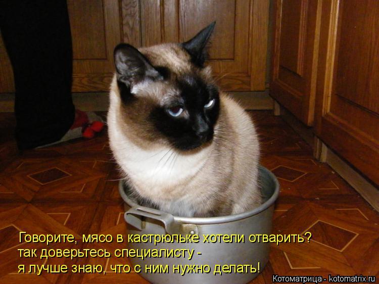 Котоматрица: Говорите, мясо в кастрюльке хотели отварить? так доверьтесь специалисту -  я лучше знаю, что с ним нужно делать!