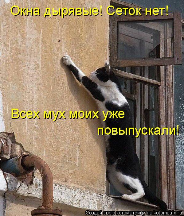 Котоматрица: Окна дырявые! Сеток нет! Всех мух моих уже  повыпускали!