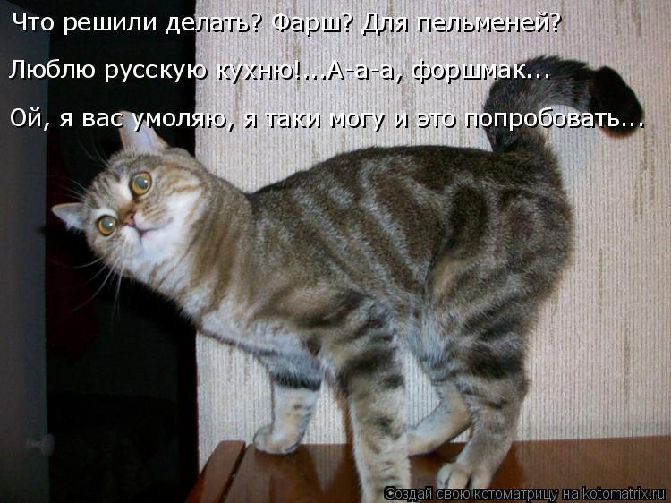 Котоматрица: Что решили делать? Фарш? Для пельменей?  Люблю русскую кухню!...А-а-а, форшмак... Ой, я вас умоляю, я таки могу и это попробовать...