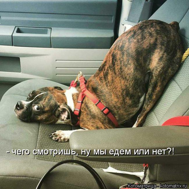 Котоматрица: - чего смотришь, ну мы едем или нет?!
