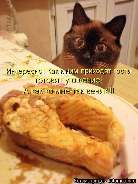 Котоматрица: Интересно! Как к ним приходят гости-  готовят угощение! А как ко мне-так веник!!!