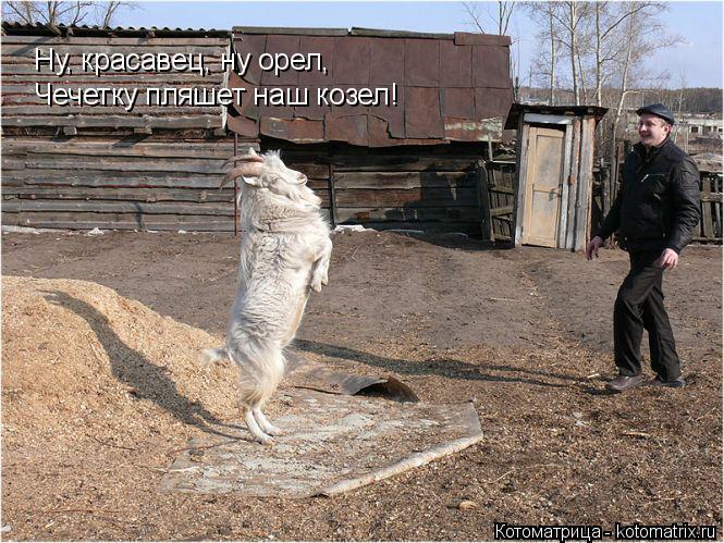 Котоматрица: Ну, красавец, ну орел, Чечетку пляшет наш козел!