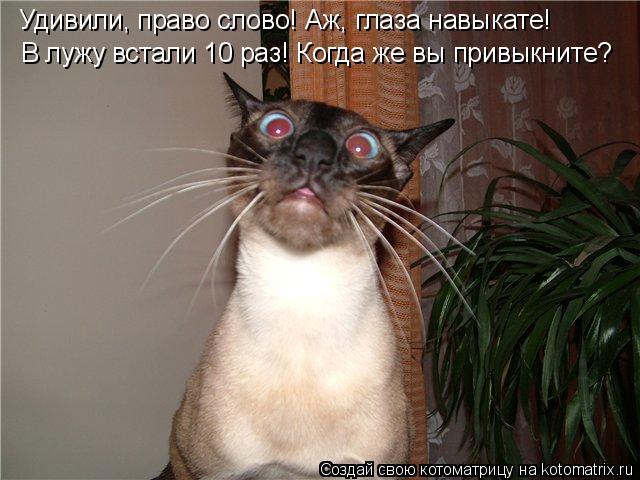 Котоматрица: Удивили, право слово! Аж, глаза навыкате! В лужу встали 10 раз! Когда же вы привыкните?