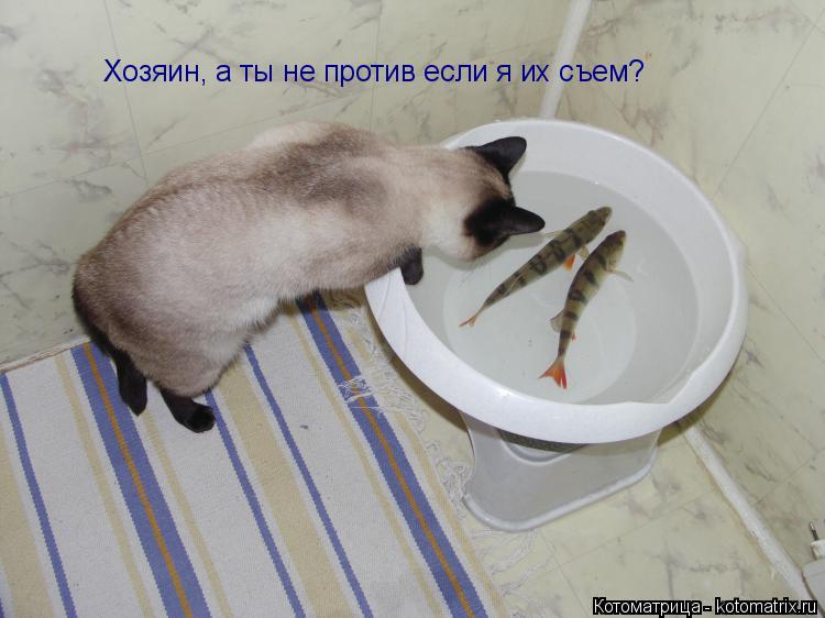 Котоматрица: Хозяин, а ты не против если я их съем?