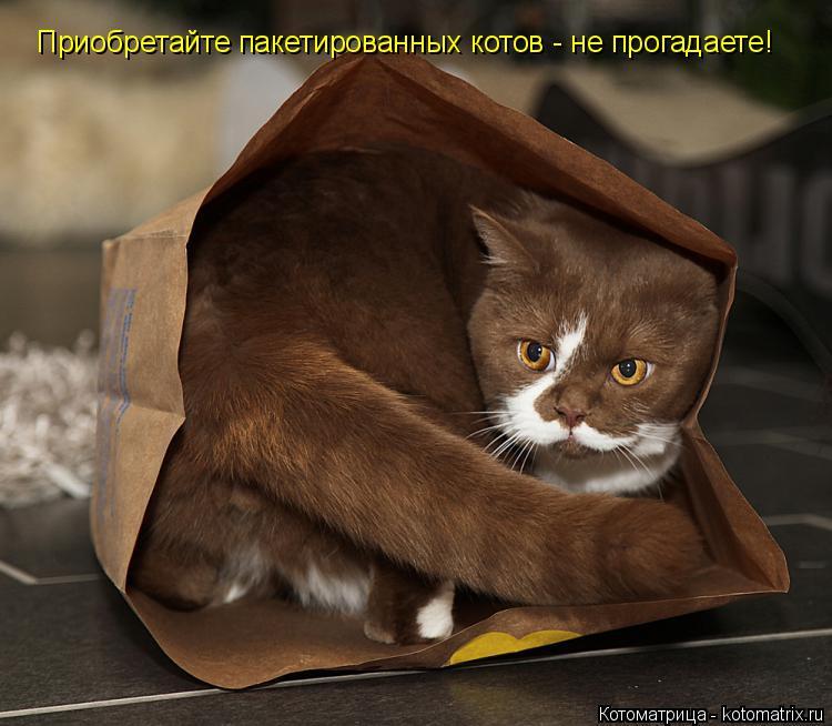 Котоматрица: Приобретайте пакетированных котов - не прогадаете!