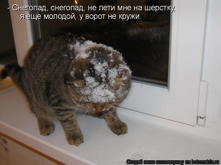 Котоматрица: - Снегопад, снегопад, не лети мне на шерстку, я еще молодой, у ворот не кружи.
