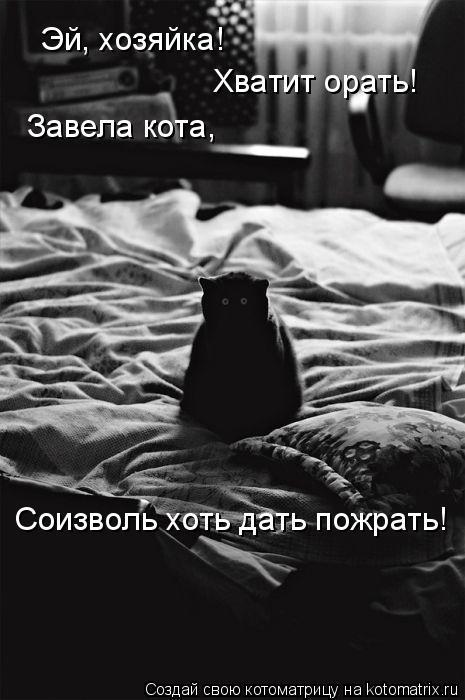 Котоматрица: Эй, хозяйка! Хватит орать! Завела кота, Соизволь хоть дать пожрать!