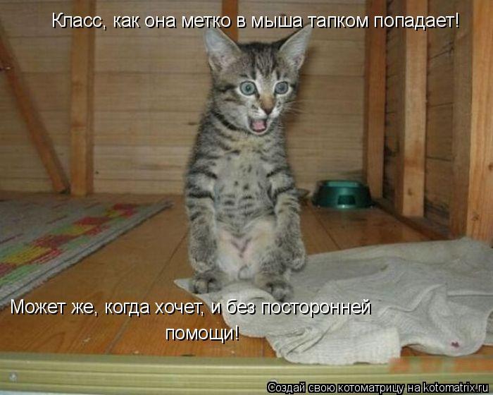 Котоматрица: Класс, как она метко в мыша тапком попадает! Может же, когда хочет, и без посторонней  помощи!